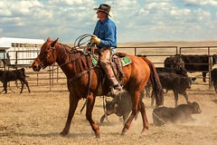 Cowboy Side View (www.toddklassy.com) Tags: ranch horse man west male rural outdoors person cowboy montana mt beef country working riding western agriculture rancher cowboyhat branding ranching stockphoto westernwear easternmontana roping stockphotography americanquarterhorse blainecounty verploegen