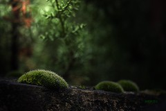 The moss... (Martika64) Tags: vigilantphotographersunite frameitlevel3 frameitlevel2 emptygroup frameillevel1
