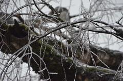 "DSC_0075 (Lynette_1_2_3) Tags: ""cold weather"" ""snow"" ""wind"" ""february ""©portlandoregondailyphoto 2014"""