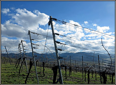 With the wind and clouds (pergi28) Tags: winter sky clouds vineyard blackforest breisgau