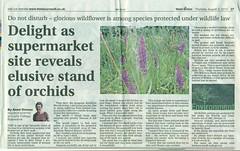 Southern Marsh Orchid West-Briton-Report (ecology_garden) Tags: