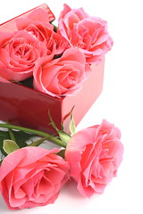 Pink roses and red gift box (Iryna Melnyk) Tags: pink wedding white holiday plant flower color green love nature glass floral beautiful beauty rose composition leaf colorful day married natural bright symbol blossom box background decoration mother valentine romance fresh petal celebration pot event gift present bunch bloom romantic botanic bouquet copyspace shape decor arrangement isolated insert blooming giftbox