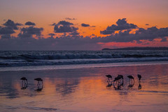 Feeding Frenzy (Pete Nunnery) Tags: ocean california blue winter light sunset red sky orange sun sunlight color bird beach nature colors birds silhouette clouds canon photography march photo losangeles spring twilight fishing flickr surf day shadows purple image cloudy ngc malibu southerncalifornia soe sunsest geodata abigfave thecolonymalibu