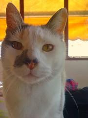 (carolinacenz) Tags: pet white argentina animal cat buenosaires kodak easyshare c813 kodakeasysharec813