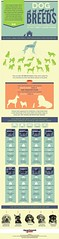 Dog Breeds infograph (preciouskidsgreatparents) Tags: dog kids parents paradise outdoor furniture great precious wicker breeds infograph