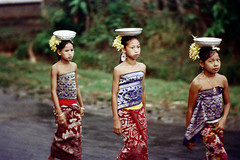 26-499 (ndpa / s. lundeen, archivist) Tags: road girls people bali color film kids 35mm children indonesia clothing women 26 traditional nick bowl line southpacific balance local procession 1970s 1972 bowls balancing indonesian carry carrying villagers unidentified balinese dewolf oceania pacificislands youngwomen pavedroad nickdewolf flowersintheirhair photographbynickdewolf onherhead ontheirheads reel26