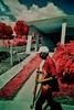 (bill bold II) Tags: film 35mm cuba trinidad infrared homedeveloped kodakeir olympusom2n colourinfrared tetenalc41