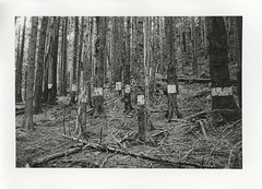 (.:Josh:.) Tags: darkroom 124 lith lithprint 75mm arista beseler23cii omnicronel75mm aristalithdeveloper124 fotokemicavaryconfbvcglossy