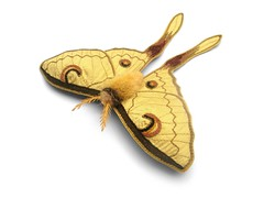 textile Isis Moth (Betsie Withey) Tags: yellow fiberart freemotionembroidery isismoth textilemoth