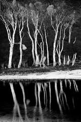 Tidal River Mangroves  Wilsons Prom (laurie.g.w) Tags: park white black reflections river landscape nikon shoreline australia prom mangroves tidal wilsons natioanl d700