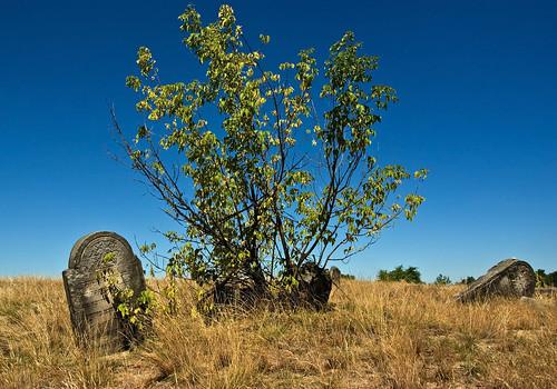 Jewish cemetery in Karczew