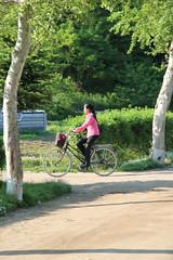 Woman on bicycle in Po-ch'on North Korea (Ray Cunningham) Tags: de kim north korea communism rpublique socialism core populaire dprk coreadelnorte ilsung demokratische  jongil   dmocratique jongun  rpdc volksrepublik   northkoreanphotography raycunninghamnorthkoreanphotography