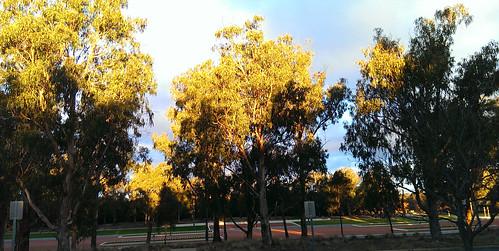 Wandering in Canberra