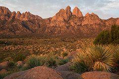 Organ Mountains WSA