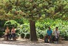 Alhambra's Beauty: one tree, two girls, two boys (Christopher DunstanBurgh) Tags: andalucia alhambra granada andalusien