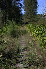 E&N milepost 37 ~ Koksilah Valley (Chris City) Tags: railroad en train railway victoria via vancouverisland disused duncan sry svi malahat shortline esquimaltandnanaimorailway