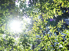 Snapseed-12 (nes) Tags: california goldengatepark forest 35mm prime bay leaf bokeh hiking hike mount trail area flare ravine redwood tamalpais alpha 18 steep norther dipseatrail sel3518