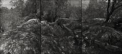 MONUMENTO NACIONAL / Acueducto Amolanas 10 (ORANGUTANO / Aldo Fontana) Tags: chile blackandwhite blancoynegro trash ruina basura abandonment abandono duotono desiertodeatacama duetone copiap regindeatacama monumentonacional orangutano aldofontana valledelrocopiap