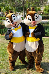 Meeting Chip and Dale (Disney Dan) Tags: travel vacation usa easter hotel march spring orlando dale florida contemporary character disney resort disneyworld chip characters fl wdw waltdisneyworld tac resorts tic contemporaryresort disneycharacters disneycharacter 2013 mickeyfriends disneypictures disneyparks disneypics disneyscontemporaryresort deluxeresort wdwapril2013