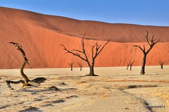 Contrasts in Deadvlei (Liv ) Tags: africa park morning travel red orange lake colors tag3 way nude landscape photography landscapes photo reflex interestingness nikon tag2 colours tag1 web reserve unesco southern national morte planet afrika manual welcome moment monuments namibia viaggio morto afrikaans reportage nationalgeographic onde afrique sossusvlei namib equilibrio leggerezza deadvlei ngi namibie naturesfinest n95 secolari naukluft supershot namibi patrimoniodellumanit latitudine aplusphoto laivphoto naturesthebest lovenatures photographerawards qualitygroup laivtravel namibsandsea liv nauklutf desertnauklutf namibiaest namibnaukluftparkkulaladesert