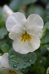 Flower (svbegun) Tags: charlottenc sigma50mmf28exdgmacro sigma50mmf28 slta37 sonyslta37 twowellsfargocenterplaza