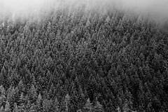 Sapins (christing-O-) Tags: winter bw mountain snow montagne alpes hiver neige valfrjus