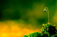 Keeping it Simple (Jack Hood) Tags: autumn orange macro green art water beautiful yellow canon garden jack gold moss drops angle 100mm hood 28 usm autumnal greatphotographers 60d astmosphere jackhoodportfolio hoodj1234