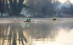 2 Rowers 2 Swans (dangerousdavecarper) Tags: river boat swans rowing mute yare sculling