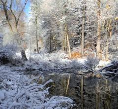 Latodami Pond (kjimbo (Wishes for Peace)) Tags: winter snow pittsburgh northpark 2013 flickrstruereflection1 flickrstruereflection2 flickrstruereflection3 flickrstruereflection4 infinitexposure