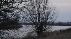 An der Eider am Tielener Moor (23) (Chironius) Tags: gegenlicht tielen stapelholm schleswigholstein deutschland germany allemagne alemania germania  szlezwigholsztyn niemcy eider fluss river rivire rio  fiume stream winter moor sumpf marsh peat bog sump bottoms swamp pantano turbera marais tourbire marcageuse