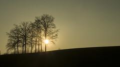 glowing tree (svenmakesphotos) Tags: sun tree germany bayern deutschland bavaria 50mm sonnenuntergang bume gegenlicht