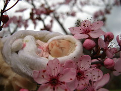 IMG_3475...*~* Baby Blossoms *~*