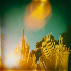 Summer lies beyond (Graustark) Tags: ir lensflare nik canong3 72288mm segopalms