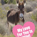 Happy Valentine's Day! Burro Valentine