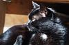 zachód-słońca Sonnen-Untergang Baden-bei-Wien sunset (arjuna_zbycho) Tags: zachódsłońca sonnenuntergang badenbeiwien sunset sunnsets sunrises clouds sky himmel niebo chmury blackcat tuxedo tuxedocat kater hauskatze cat animal cute animals pets gato kitten feline kitty kittens pet tier haustier katzen gattini gatto chat cats kocio
