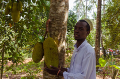 jack fruit (sixthofdecember) Tags: travel africa eastafrica tanzania zanzibar zanzibarisland island spicetour nature food outside outdoors sunny sunshine nikon nikond5100 tamron tamron18270 fruit jack jackfruit people man