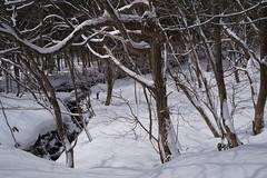 _IMG4282 (YASSAAN) Tags: pentax k1 japan snowboard backcountry backcountrysnowboarding 比婆山 広島 島根 スノーボード バックカントリー