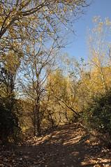 JRLD-20101118_5009 (XoseMon) Tags: spain zaragoza aragón aragn