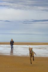 Come On Then (wulfrunnut) Tags: alnmouth beachnorthumberlanddogsand