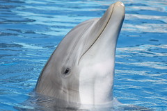 Yoshe (EchoBeluga) Tags: marine dolphin kingdom center flags atlantic research six discovery bottlenose