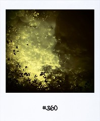 "#DailyPolaroid of 14-9-13 #360 • <a style=""font-size:0.8em;"" href=""http://www.flickr.com/photos/47939785@N05/9879937426/"" target=""_blank"">View on Flickr</a>"