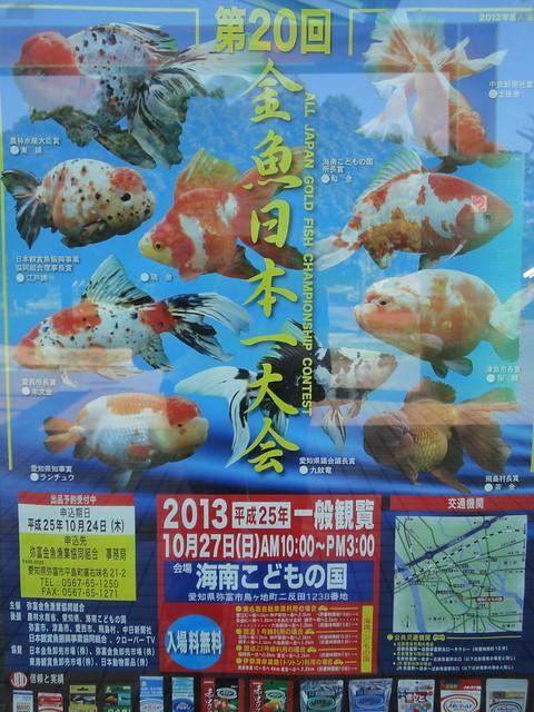 海南こどもの国がある弥富市は、金魚の生産量日本一。|海南こどもの国