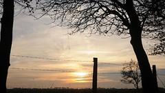 Sonnenuntergang hinter Stacheldraht; Süderstapel, Stapelholm (3) (Chironius) Tags: süderstapel stapelholm schleswigholstein deutschland germany allemagne alemania germania германия szlezwigholsztyn niemcy gegenlicht sonnenuntergang sunset atardecer tramonto zonsondergang закат dämmerung dusk schemering crépuscule crepuscolo abend evening abends landwirtschaft