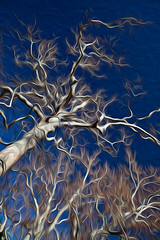 Reaching (ImagesOfTheWild) Tags: trees wild arizona sky plants plant tree art nature digital creek landscape island islands paint branch branches digitalart scenic canyon sycamore oil fractal fractals preserve oilpaint ramsey riparian natureconservancy ramseycanyon sierravista branching skyisland arizonasycamore ramseycreek skyislands ramseycanyonpreserve platanuswrightii madreanskyislands