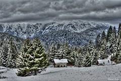 Paesaggi invernali 7 (Roberto Carlon) Tags: trees mountain snow cold alberi clouds landscape nuvole neve montagna freddo paesaggio passovezzena stepvezzena