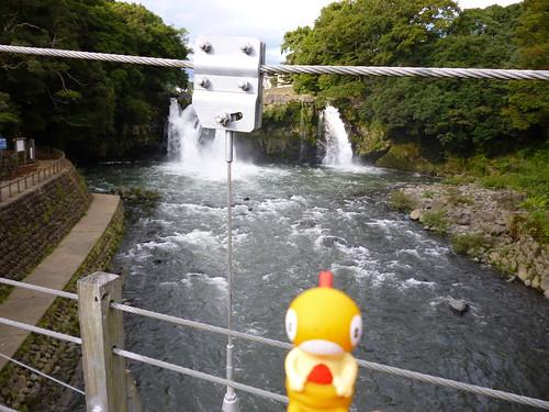 Scraggy in Susono, Shizuoka 14 (Goryu Falls)
