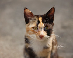 Today's cat 2014.3.2 (ladious666) Tags: life animal cat alive catsplanet