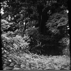 Bale Dutung... (josavi) Tags: blackandwhite sculpture mediumformat garden 150 tikbalang foldingcamera zeissikonnettar parodinal baledutung claudetayag novaranastigmat75mmf45 maryanntayag ultrafineextreme400 bwfp