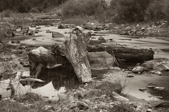 arrastrando (Bernardo Guzman Roa) Tags: rio arbol rocas troncos ribera 2014 desechos