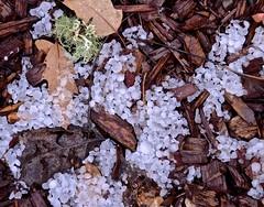 """""""Behind the Cellar Door"""", 2017, hail, ice crystals, leaves, Plymouth, tan bark (David McSpadden) Tags: behind cellar door 2017 hail icecrystals leaves plymouth tanbark"""